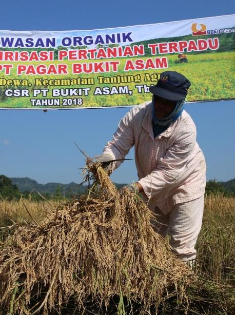 Circular Economy Pertanian Terpadu Desa Pagar Dewa